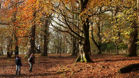 Kings Wood in autumn